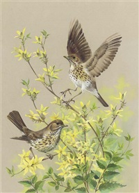 mistle thrush on honeysuckle (+ 5 others, various sizes; 6 studies) by mary elliot lacey
