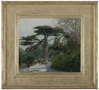 cedar of lebanon, jardin des plantes, paris by macowin tuttle