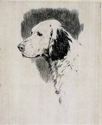 head of white pointer (+another; 2 works) by anne wilson goldthwaite
