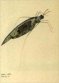 paradiso ancloidre (+ 3 others, various sizes; 4 works from study of insects) by walter spies