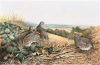 grey partridge, after the harvest by berrisford hill