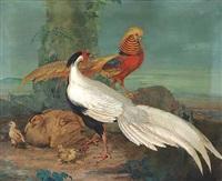 opstilling med prægtige fasaner i et landskab, overst en guldfasan, så en solvfasan og nedenfor en solvfasanhone med sine kyllinger by nicolai peters herm. sohn