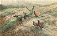pheasants in a woodland by berrisford hill