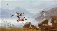 landschaft in schottland mit auffliegenden enten und möwen vor gebirgiger küste by robert henry roe