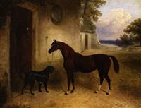 braunes pferd und hund vor stall by edward walter webb