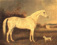 mazeppa, favourite horse of francis milner ailthorpe by arthur lewis townshend
