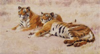 tigers by john charles dollman