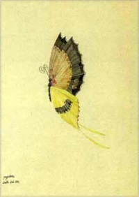 pappiliona (+ 2 others; 3 works from study of insects) by walter spies