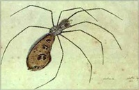arachneida (+ 3 others, various sizes; 4 works from study of insects) by walter spies