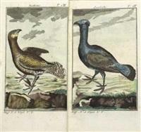 naturgeschichte der vögel (11 volumes w/400 works) by georges louis leclerc buffon