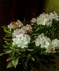 opstilling med hvid og lyserod rhododendronbusk by alfrida baadsgaard