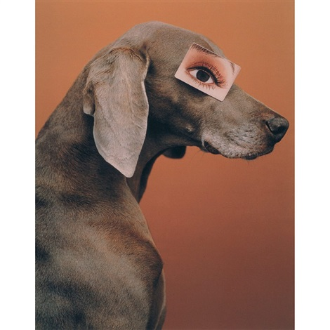 eyewear game by william wegman