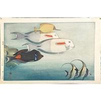 fishes of honolulu by hiroshi yoshida