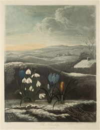 the snowdrop by william ward