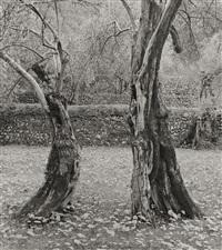 dancing olives, mallorca by ellen auerbach