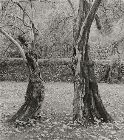 dancing olives mallorca by ellen auerbach