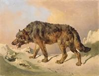 siberian wolf by johann nepomuk rauch