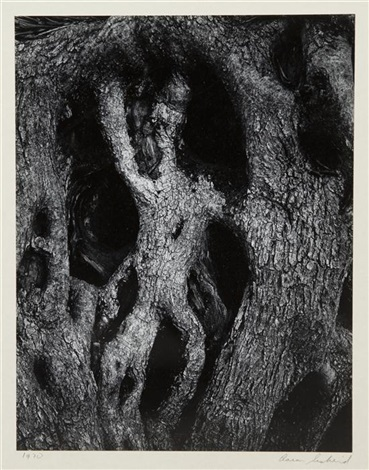 olive tree corfu 33 by aaron siskind