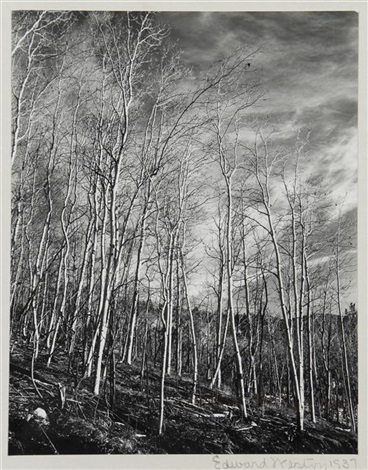 aspens new mexico by edward weston