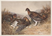 english grouse by william woodhouse