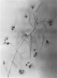 blüten by hanna josing
