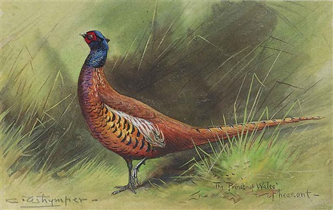 the prince of wales pheasant by charles whymper