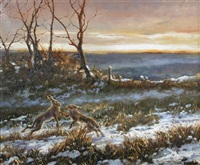 boxing hares in winter by mick cawston