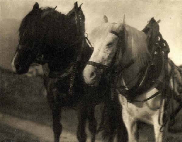 horses 1904 by alfred stieglitz