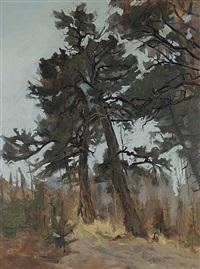 douglas pines by frank vervoort