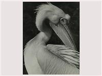pelikan by rudolf rattinger