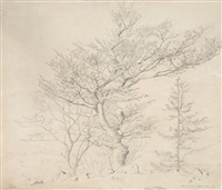 tree study from the black forest by hans thoma