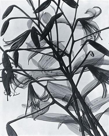 lilien röntgenaufnahme by herbert w franke
