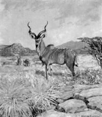 kudu-antilope in afrikanischer landschaft by hans anton aschenborn