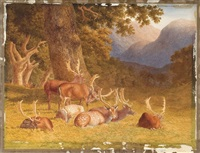 herd of deer resting under a tree by robert hills
