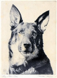 rin-tin-tin by morgan dennis