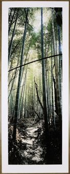 bamboo forest, nara, japan by wim wenders