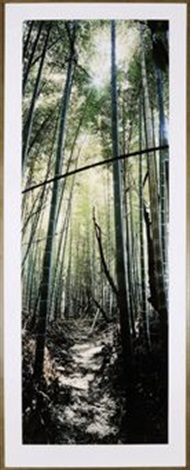 bamboo forest nara japan by wim wenders