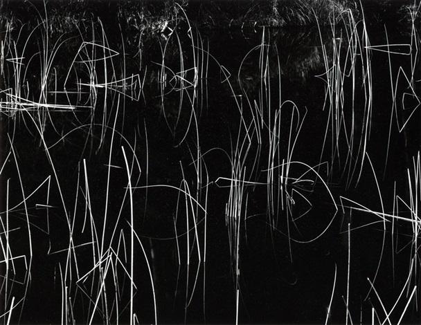 reeds by brett weston