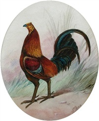 a light red gamecock by j.e. dean