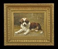 st. bernard puppy by anton karssen