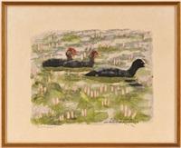 poule d'eau et ses petits,lac des taillères, 30 juillet by robert hainard