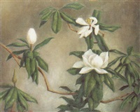 magnolia by glenn bahm
