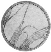 bakterium - selbstzeugnisse by edgar lissel