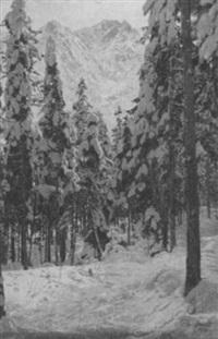 verschneiter wald am eibsee by paul geissler