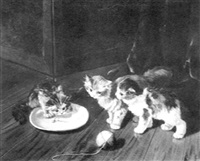 spielende katzchen by f. krantz