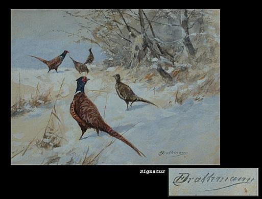 fasane im schnee by christoffer johann drathmann
