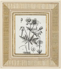 four botanical studies: currant; lady's mantle; carrot; and wild geranium by josef fleischmann