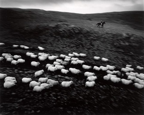 sheep round up - iceland by ragnar axelsson (rax)