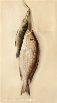 nature morte: a drum and a bass by george joseph amede coulon
