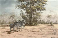 zebras in the bush by robert macintosh